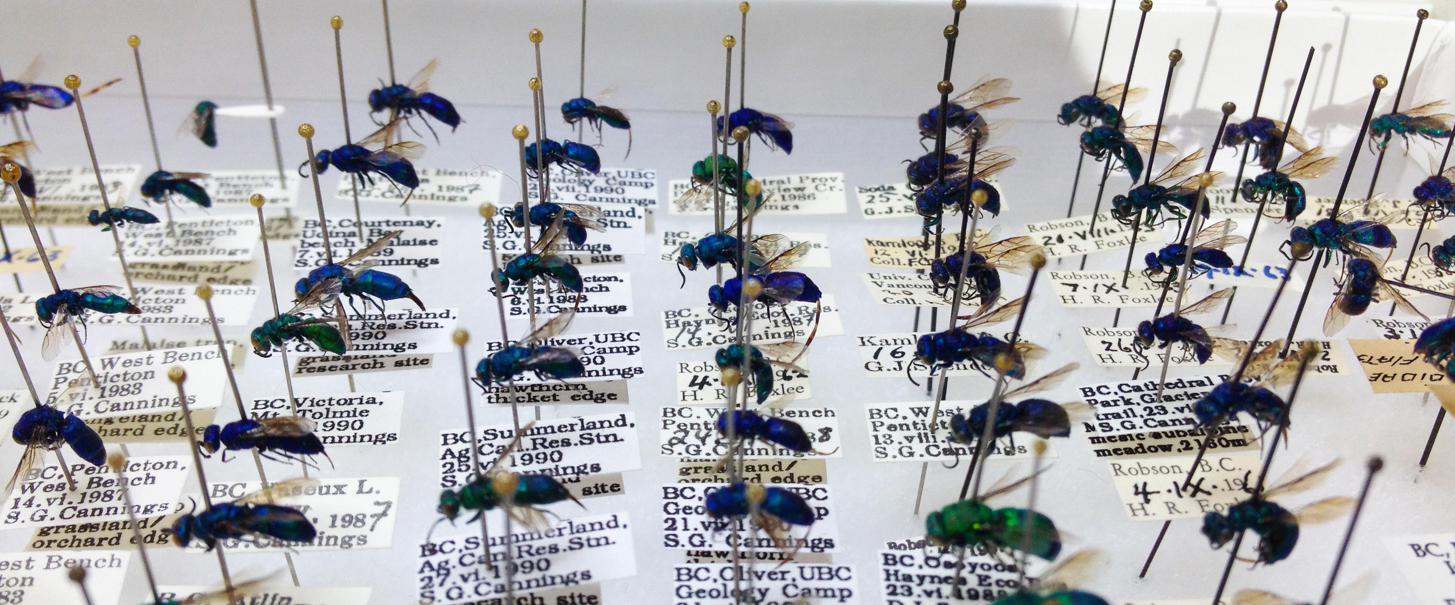 Spencer Entomological Collection