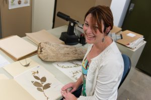 Jennifer Ackerfield, Herbarium Curator in the Biology Department, shows off specimins in the CSU collection. May 12, 2015